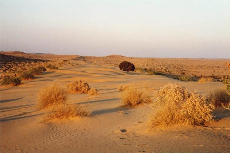 thar-desert-near-jaisalmer-rajasthan